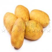 125-pomme-de-terre