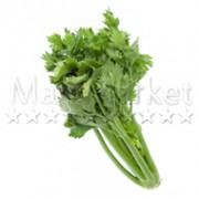 137-celeri